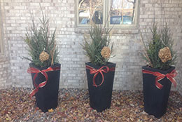 Winter Plantings