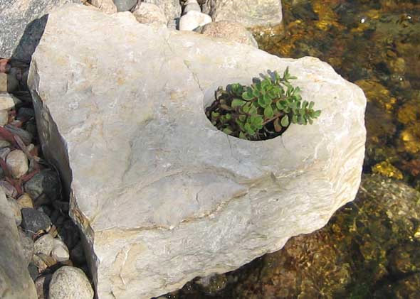 Rocks with growing soil and plants for gardens