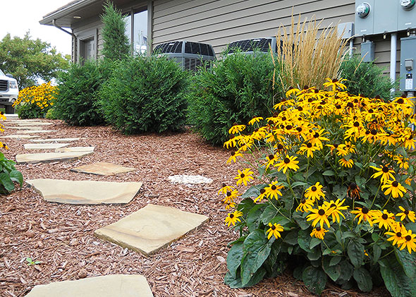 Golden daisies and lush shrubs