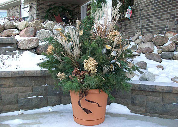 Winter seasonal flowers and plants in outdoors pot