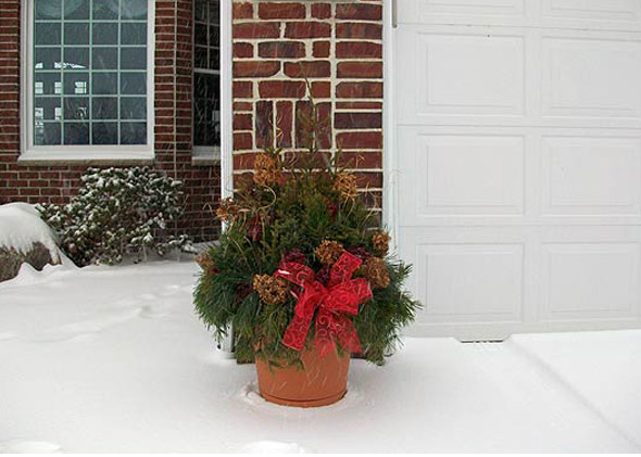 Winter christmas plant and shrubbery decorations