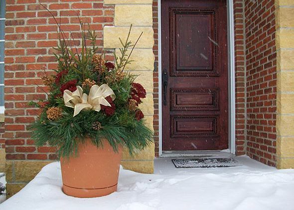 Doorstep potted plant lasts all winter through snow and ice